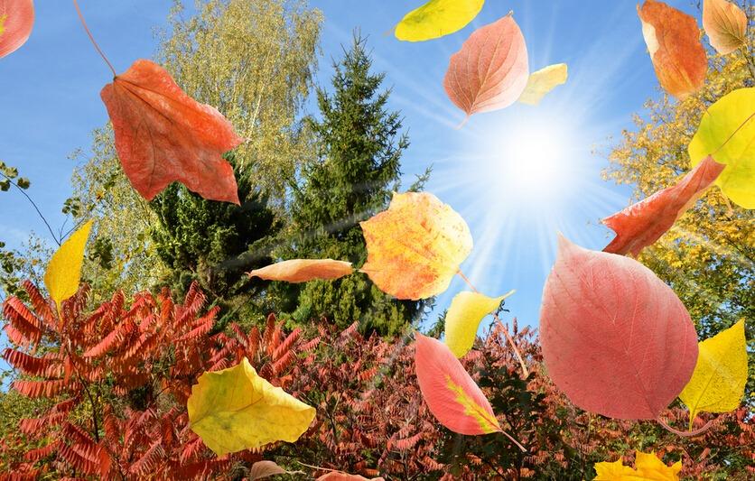 幼儿园中班音乐活动教案:秋天的落叶